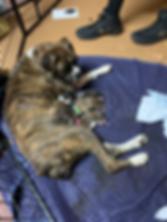 IMG_2745_eZy Watermark_31-03-2019_01-30-