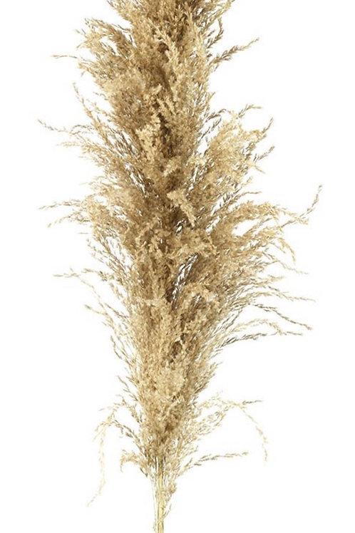 PAMPAS GRASS - NATURAL - 3 STEMS