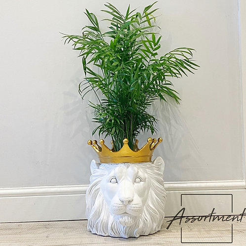 KING LION PLANTER