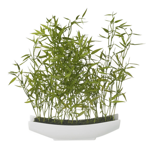 POTTED BAMBOO
