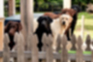 boonfield-86_18926936760_o_edited.jpg