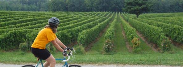 bicycle at south river vineyard
