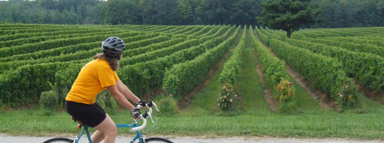 bicycle at south river vineyard