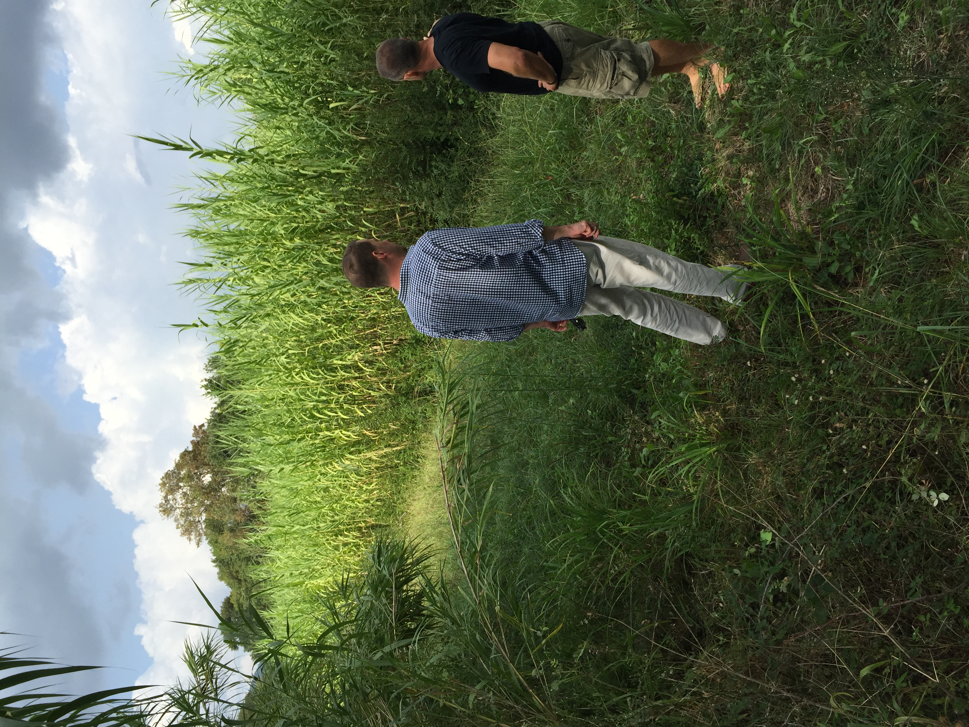 In the cane fields of Cogolin