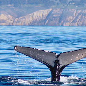 whale.webp