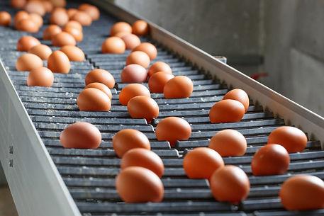 EggsOnConveyorBelt_Lead1.jpg
