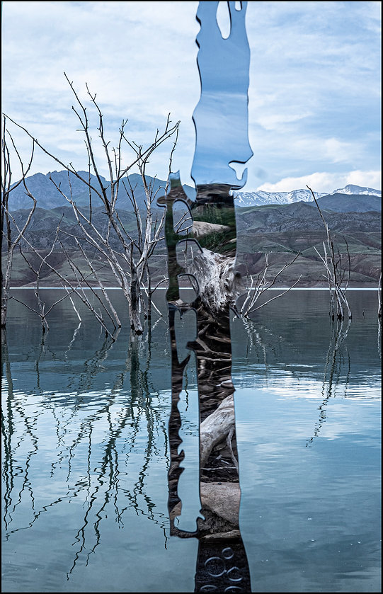 'memory of walnut tree II' -2021-110x70 -photograph  copy.jpg