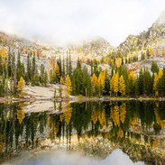 Larch Tree Reflecting in Middle Lake by Adam Birely