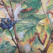 Fall Grapes in Bordeaux by Alison Bourquin