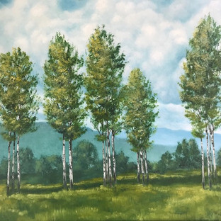 poplars in meadow