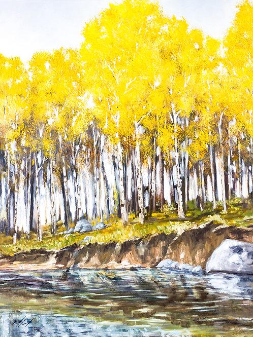 Original - The River Aspens