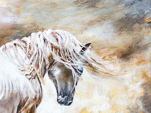 Original - Wild Stallion Study 1