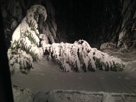 SNOW, TREES, NO POWER OH MY!