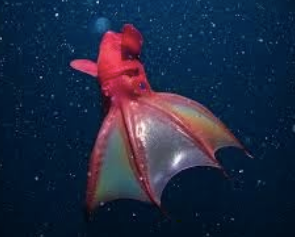 The Caped Cephalopod