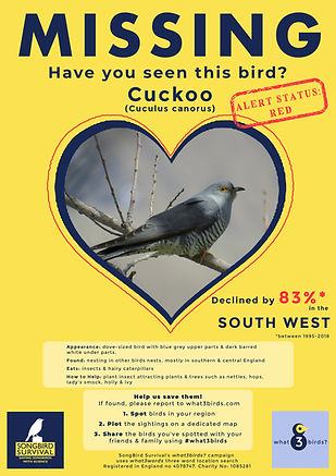 SOUTH WEST, Cuckoo, Missing Poster, Song