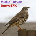 Mistle Thrush 57.jpg