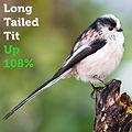 Long Tailed Tit 108.jpg