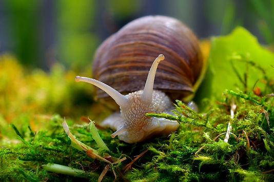 snail-4191658_1920.jpg