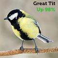 Great Tit 98.jpg