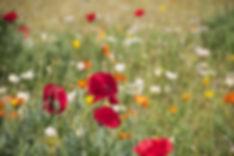 floral-199099.jpg