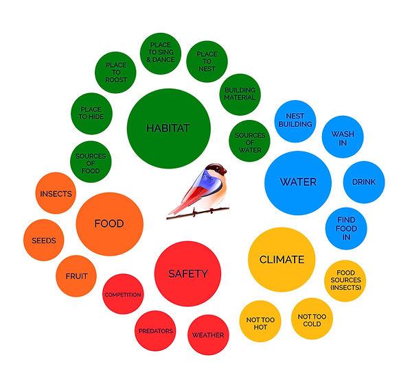 Factors that affect songbirds.jpg