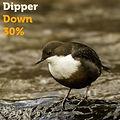 Dipper 30.jpg