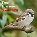 Tree Sparrow 96.jpg