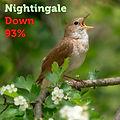 Nightingale 93.jpg