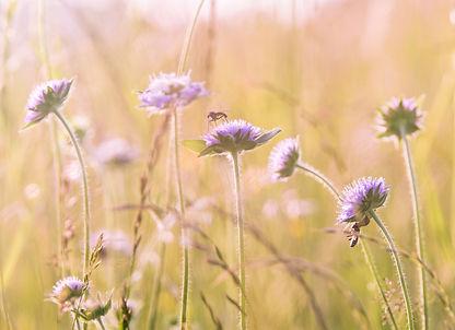 wildflowers-1406845.jpg