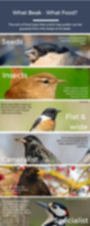 What Beak what Food.png