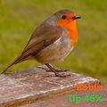 Robin 46.jpg