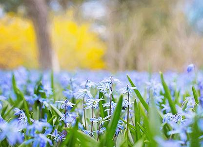 spring-flowers-741965.jpg