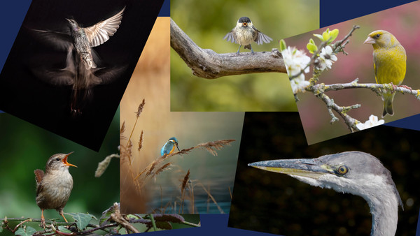 19/08/21 - On World Photography Day SBS announces the what3birds? Photography Competition Winners!