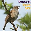 Dunnock 36.jpg