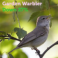 Garden Warbler 27.jpg