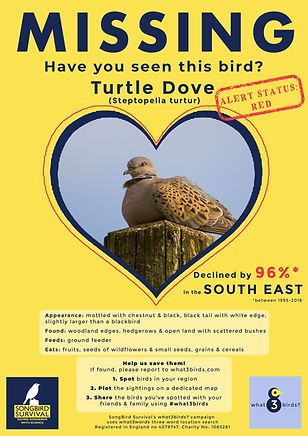 SOUTH EAST, Turtle Dove, Missing Poster,