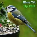 Blue Tit 29.jpg