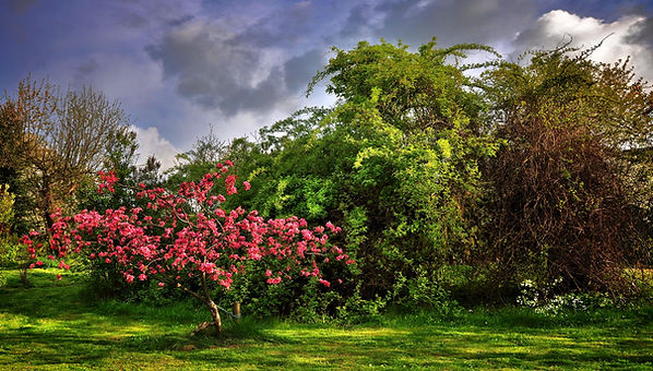 paradise-tree-2288069.jpg