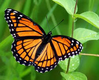 butterfly green.jpg