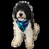 JC Reversible Dog Bandanas Pacifia Paua