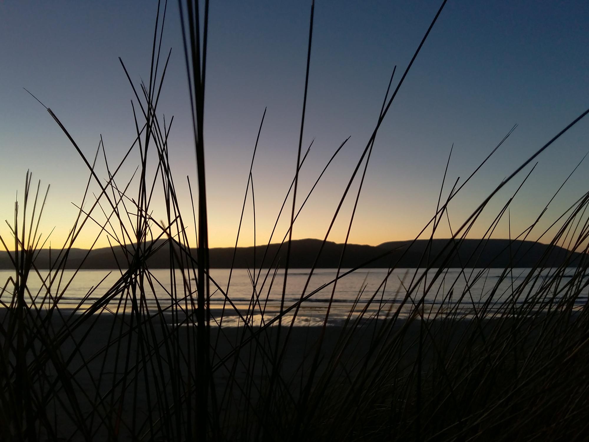 Wildgrass at Balnakeil Beach 20170120_16