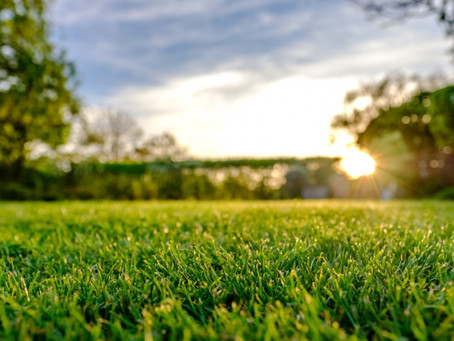 Turn Your Lawn GREEN This Spring