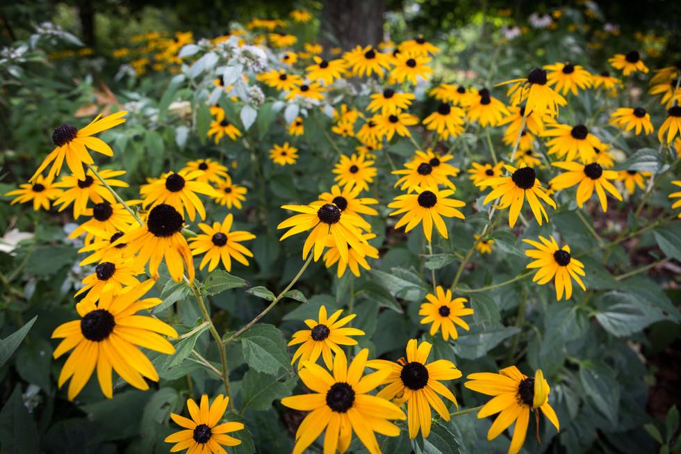 Flowers-at-Burgess-Falls.jpg