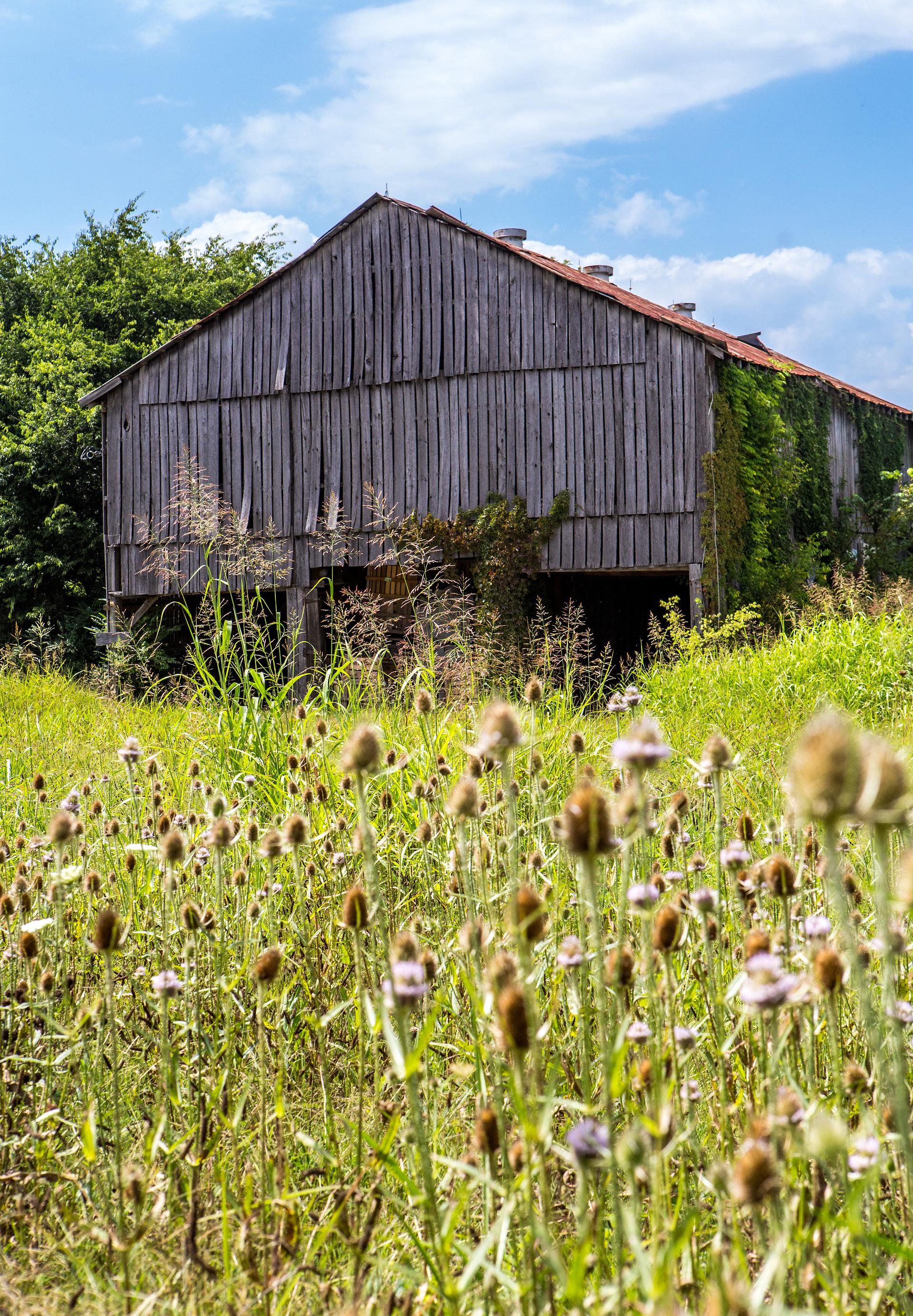 Barn-Wood.jpg