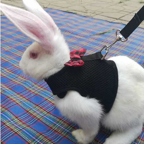Small Pet Mesh Harness
