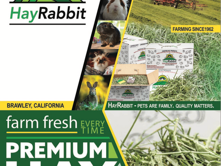 New HayRabbit Website Reveal!