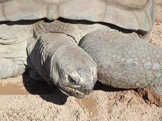 aldabra-tortoise-69753_1280.jpg