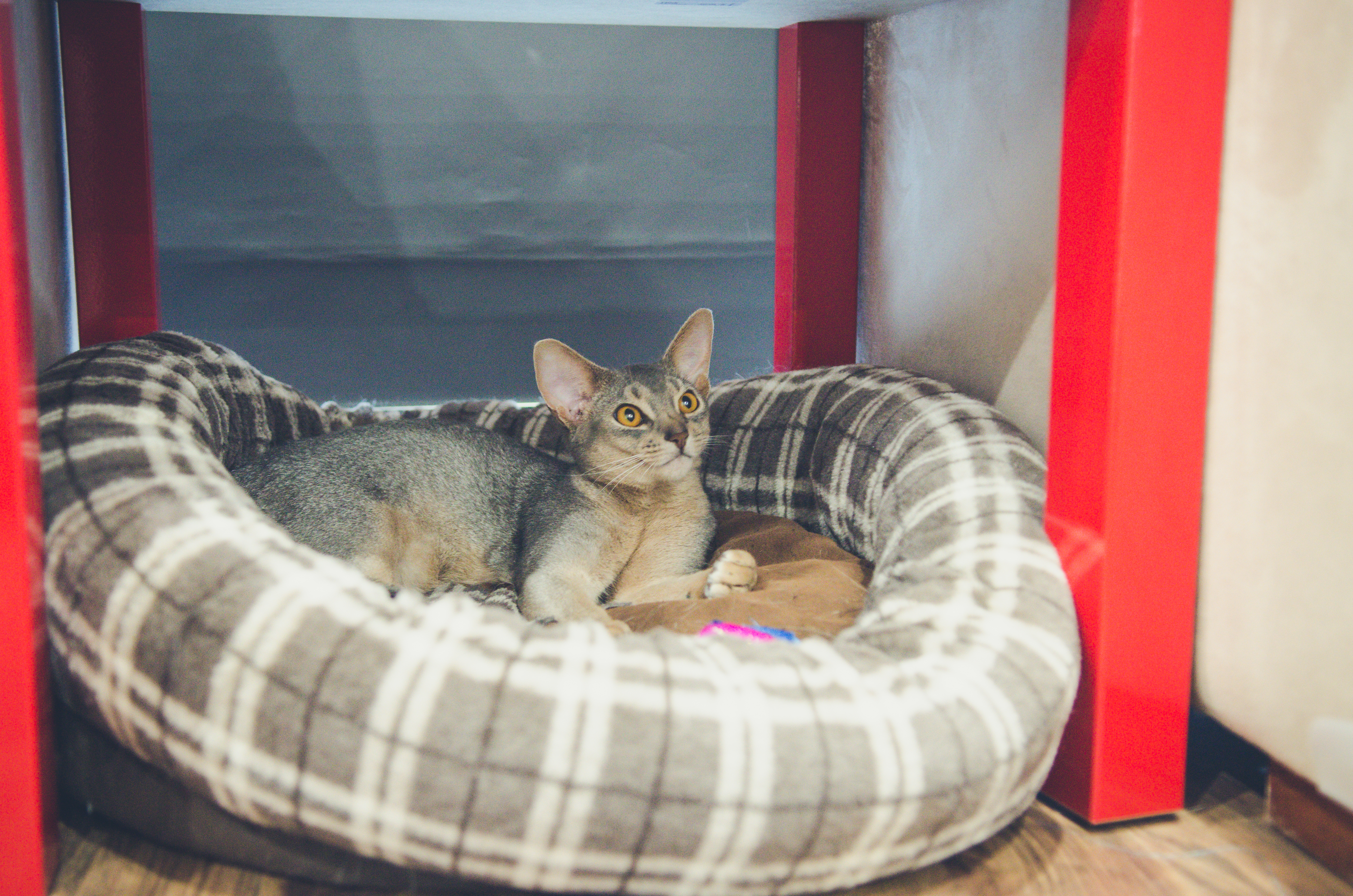 CatCafe-8