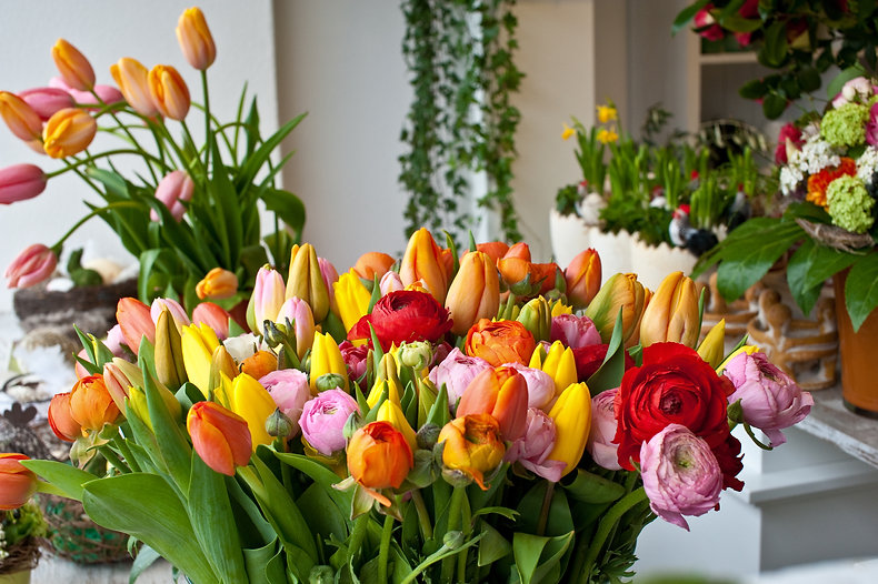 Frühling, Belflor Blumen Luzern