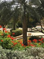Riad.jpg